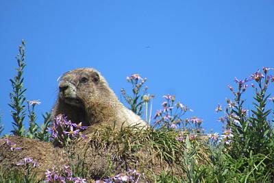 Photograph - Rainier Marmot by Karen Molenaar Terrell