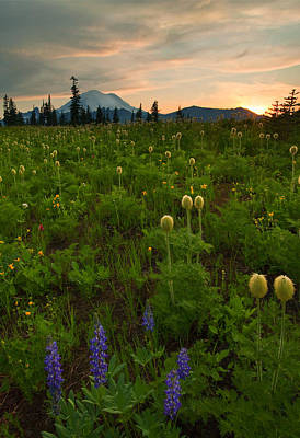 Anenome Photograph - Rainier Wildflower Light by Mike  Dawson