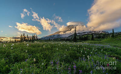 Photograph - Rainier Wildflowers Golden Lenticular Sunset by Mike Reid