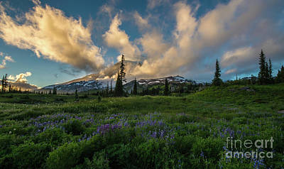 Photograph - Rainier Wildflowers Meadows Golden Sunset Clouds by Mike Reid