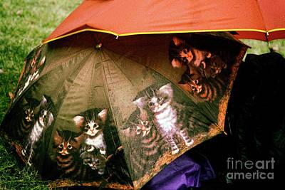 Raining Cats  Art Print by Steven Digman