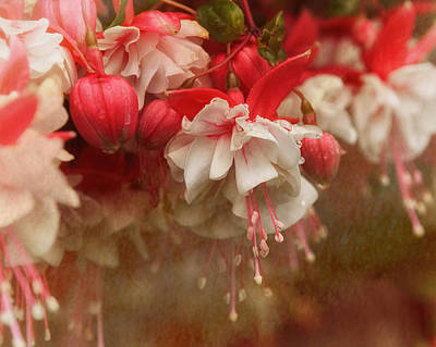 Hanging Basket Photograph - Raining Fuchsia by Susan Capuano