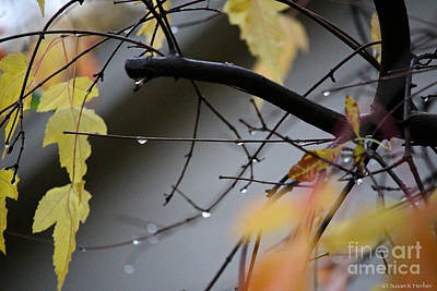 Photograph - Rainy Afternoons by Susan Herber