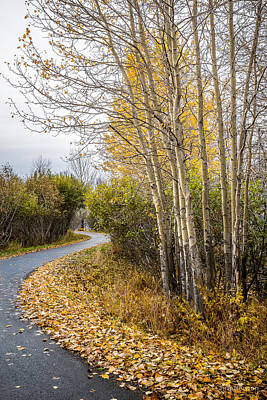 Photograph - Rainy Autumn Walk by Tim Newton