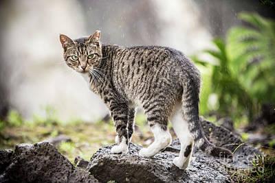 Photograph - Rainy Cat 1 by Daniel Knighton
