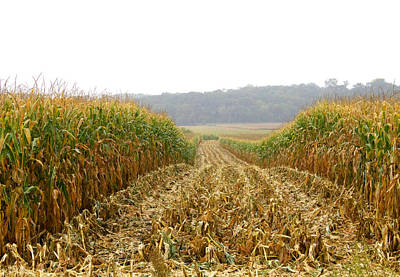 Photograph - Rainy Corn Harvest by Les Weber