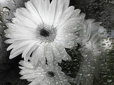 Photograph - Rainy Day Daisies by Rory Sagner