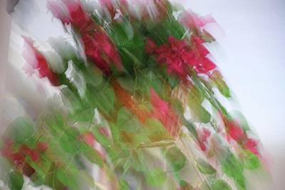 Photograph - Rainy Day Floral by Florene Welebny