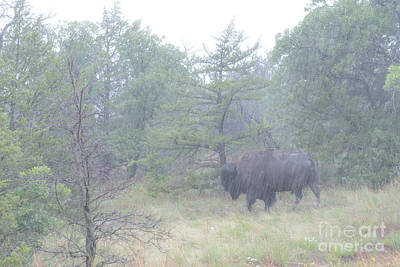Photograph - Rainy Day For The Bison by Tamyra Ayles