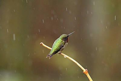 Rainy Day Hummingbird Art Print