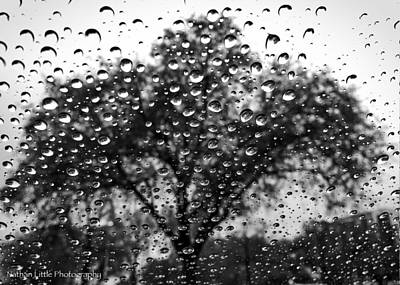 Photograph - Rainy Day Oak Tree by Nathan Little