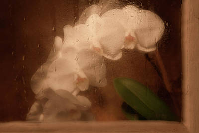 Orchids Photograph - Rainy Day Orchid by Tom Mc Nemar