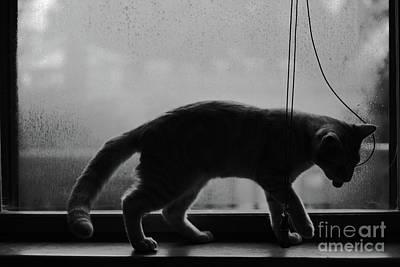 Photograph - Rainy Day Play by Patrick M Lynch
