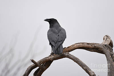 Rainy Day Raven Art Print