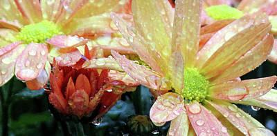 Photograph - Rainy Day by Silke Brubaker