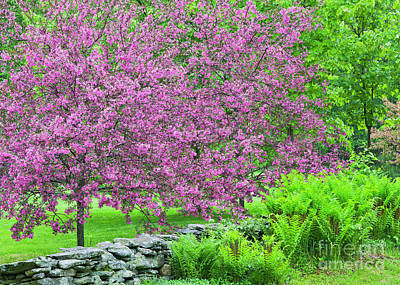 Photograph - Rainy Day Spring Colors by Alan L Graham