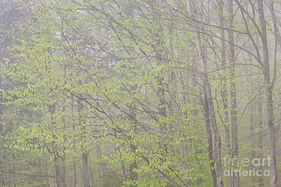 Photograph - Rainy Day Spring Woods by Alan L Graham