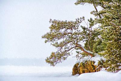 Photograph - Rainy Lake Pine by Lori Dobbs