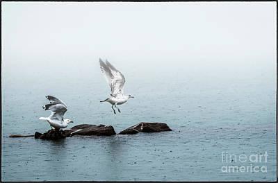Photograph - Rainy Take Off by Joann Long
