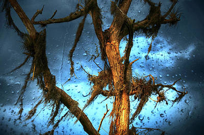 Photograph - Rainy Weather On The Cyprus Trees by Elaine Manley