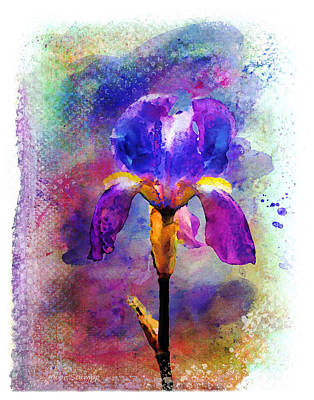 Florals Royalty-Free and Rights-Managed Images - Rainy Weekend Iris by Moon Stumpp