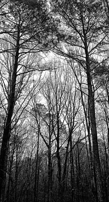 Photograph - Rainy Winter Morning North Carolina by Jim Moore