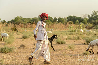 Photograph - Rajasthani Goatherd 03 by Werner Padarin