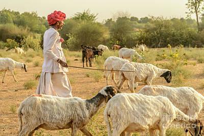 Photograph - Rajasthani Goatherd 04 by Werner Padarin