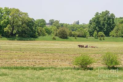 Photograph - Raking Hay by David Arment