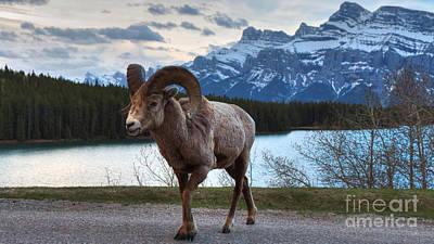 Western Art - Ram Crossing in widescape by James Anderson