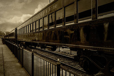 Photograph - Rambler by Sharon Popek