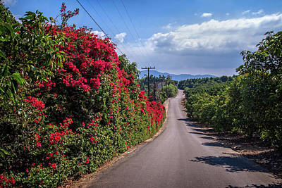 Avacado Photograph - Rambling Road by Lynn Bauer