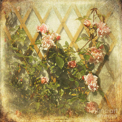 Photograph - Rambling Rose by Liz  Alderdice