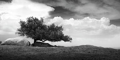 Photograph - Ramona Grasslands Tree by William Dunigan