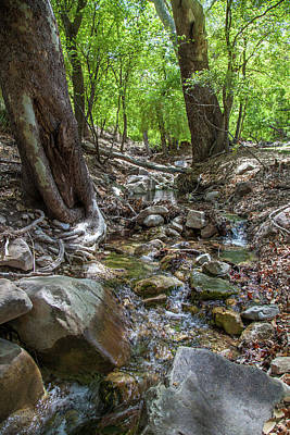 Photograph - Ramsey Canyon Preserve by Lon Dittrick