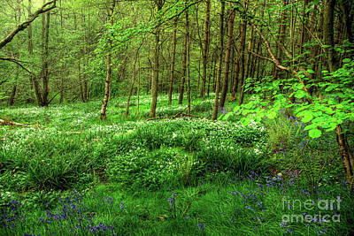 Spring Scenery Photograph - Ramsons And Bluebells by John Edwards