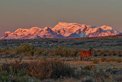 Photograph - Ranch Dawn - Patagonia by Stuart Litoff