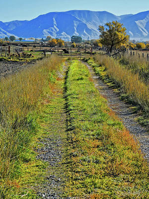 Photograph - Ranch Driveway by David King