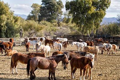 Ranch Herd Original