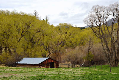 Photograph - Ranch Shed Under Springtime Trees by Kae Cheatham