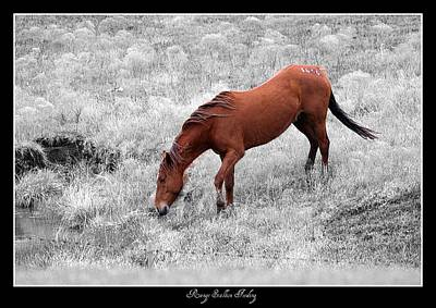 Photograph - Range Stallion Feeding Bw Colorized by David Dunham