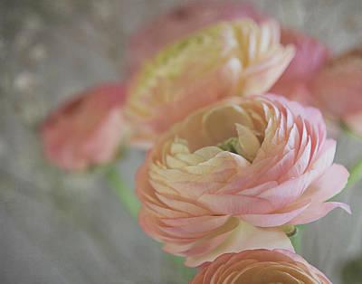 Photograph - Ranunculus - 6219 by Teresa Wilson