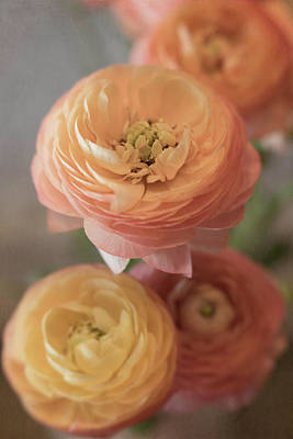 Photograph - Ranunculus - 6296 by Teresa Wilson