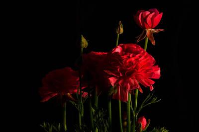 Photograph - Ranunculus by Ann Bridges