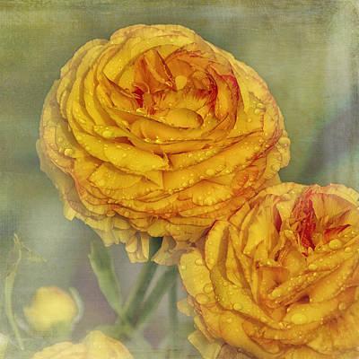 Animal Paintings David Stribbling - Ranunculus by Belinda Greb