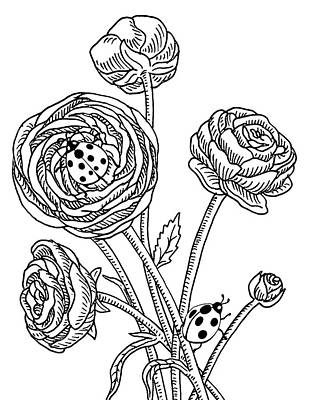 Drawing - Ranunculus Flower And Ladybugs Drawing  by Irina Sztukowski