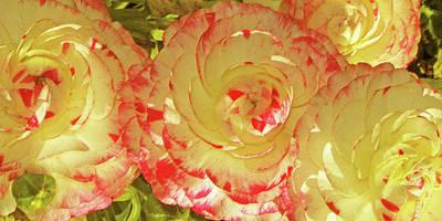 Photograph - Ranunculus Group by Ben and Raisa Gertsberg