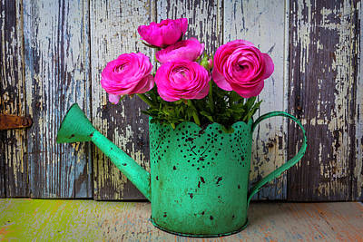 Chipping Paint Photograph - Ranunculus In Green Watering Can by Garry Gay