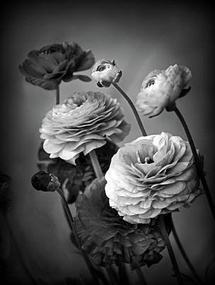 Photograph - Ranunculus In Monochrome by Jessica Jenney