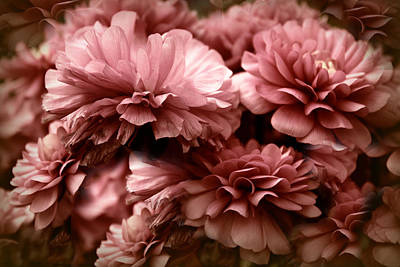 Photograph - Ranunculus Petal Play by Jessica Jenney
